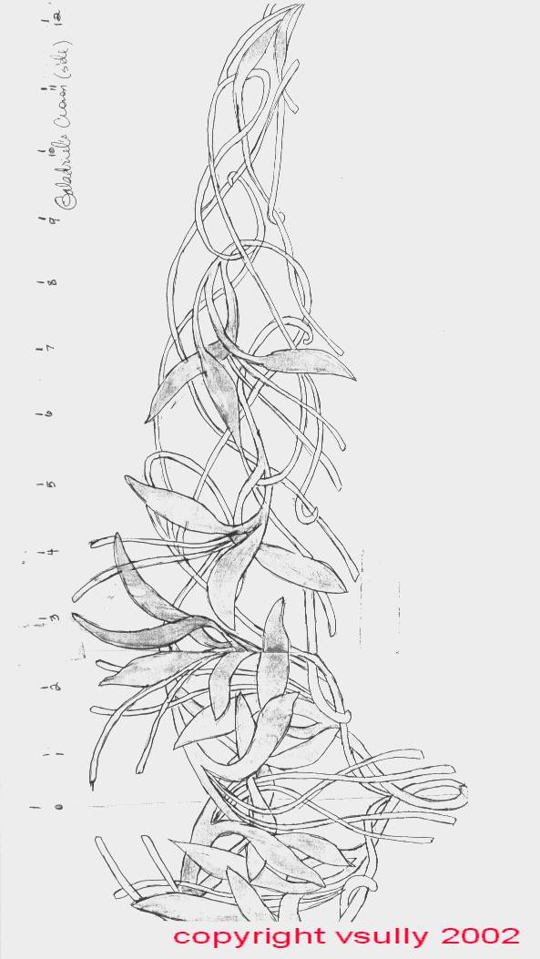 593 x 1053 · 71 kB · jpeg, Pattern for Making Galadriel's Elven ...